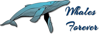 Image of Whales Forever Logo